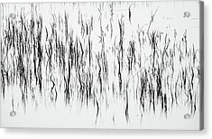 San Diego River Grass In Black And White Acrylic Print