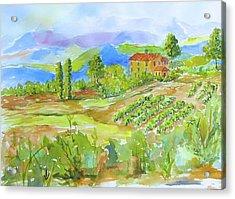 Vineyard At San Gimignano Acrylic Print