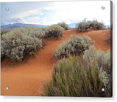 Sand And Sagebrush Acrylic Print
