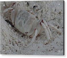 Sand Crab Acrylic Print