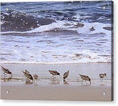 Sand Dancers Acrylic Print by Steven Sparks