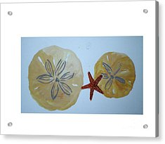 Sand Dollars With Star Fish Acrylic Print by Hal Newhouser
