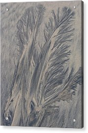 Sand Drawing 1 Acrylic Print by Kevin Callahan