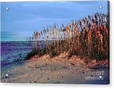 Sand Dune Sea Oats Sunrise Outer Banks Acrylic Print by Dan Carmichael