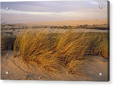 Sand Dunes At Oso Flaco Nature Acrylic Print by Rich Reid