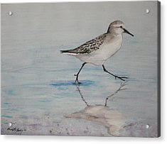 Sand Piper Acrylic Print