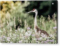 Sandhill Crane Acrylic Print by Cathy Cooley