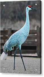 Sandhill Crane Acrylic Print by DigiArt Diaries by Vicky B Fuller