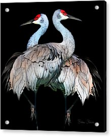 Sandhill Crane Mirror Image Acrylic Print