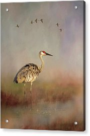 Sandhill Crane - Painterly Vertical Acrylic Print
