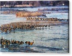 Sandhill Crane Platte River - Textured Acrylic Print