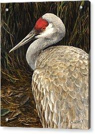 Acrylic Print featuring the painting Sandhill Crane - Realistic Bird Wildlife Art by Karen Whitworth