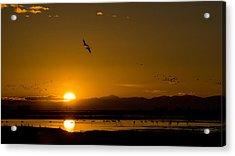 Sandhill Crane Sunrise Acrylic Print
