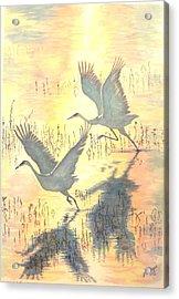 Sandhill Cranes Acrylic Print by Dan Bozich