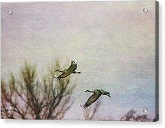 Sandhill Cranes Flying - Texture Acrylic Print