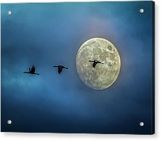 Acrylic Print featuring the photograph Sandhill Cranes With Full Moon by Patti Deters