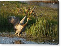 Acrylic Print featuring the photograph Sandhill Stretches by Lynda Dawson-Youngclaus