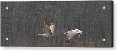 Acrylic Print featuring the photograph Sandhills In Flight by Shari Jardina