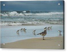 Sandpiper Beach Acrylic Print