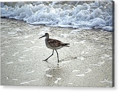 Sandpiper Escaping The Waves Acrylic Print