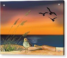 Sandpiper For Angel Acrylic Print