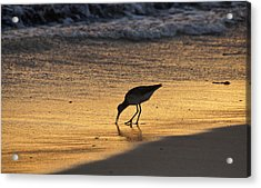 Sandpiper In Evening Acrylic Print by Sandy Keeton