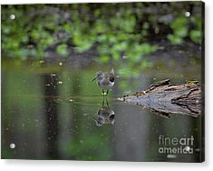 Sandpiper In The Smokies Acrylic Print by Douglas Stucky