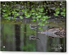 Sandpiper In The Smokies II Acrylic Print by Douglas Stucky