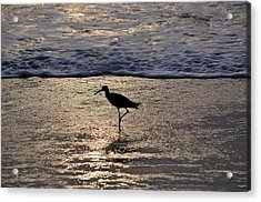 Sandpiper On A Golden Beach Acrylic Print