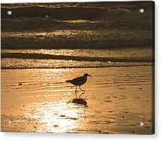 Acrylic Print featuring the photograph Sandpiper by Peg Urban