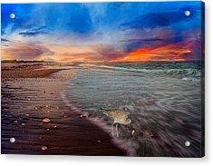 Sandpiper Sunrise Acrylic Print by Betsy Knapp