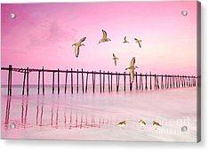 Sandpiper Sunset Acrylic Print