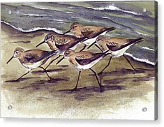 Sandpipers Acrylic Print by Nancy Patterson