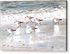 Sandpipers On Siesta Key Acrylic Print by Shawn McLoughlin