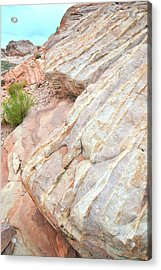 Acrylic Print featuring the photograph Sandstone Feet In Valley Of Fire by Ray Mathis
