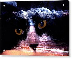 Sandy Paws Acrylic Print by Clayton Bruster