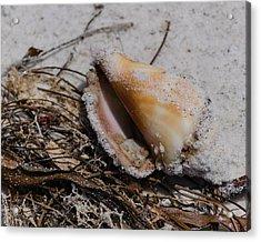 Sandy Seashore Treasures Acrylic Print