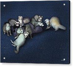 Sandy's Ferrets Acrylic Print by Barbara Hymer