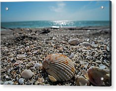 Sanibel Island Sea Shell Fort Myers Florida Acrylic Print