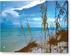 Acrylic Print featuring the photograph Sanibel Sea Oats by Timothy Lowry