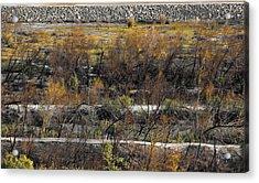 Santa Ana River Bed Acrylic Print by Viktor Savchenko