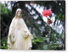 Acrylic Print featuring the photograph Santa Catalina Rose by Wilko Van de Kamp