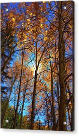 Acrylic Print featuring the photograph Santa Fe Beauty II by Stephen Anderson