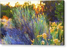 Acrylic Print featuring the photograph Santa Fe Beauty by Stephen Anderson