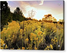 Acrylic Print featuring the photograph Santa Fe Magic by Stephen Anderson