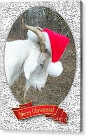 Santa Goat Acrylic Print