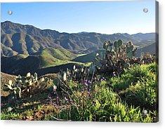 Acrylic Print featuring the photograph Santa Monica Mountains - Cactus Hillside View by Matt Harang