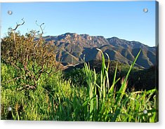 Acrylic Print featuring the photograph Santa Monica Mountains Green Landscape by Matt Harang