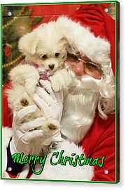 Acrylic Print featuring the painting Santa Paws  by Darren Robinson