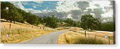 Santa Rosa Creek Road Passing Acrylic Print by Panoramic Images